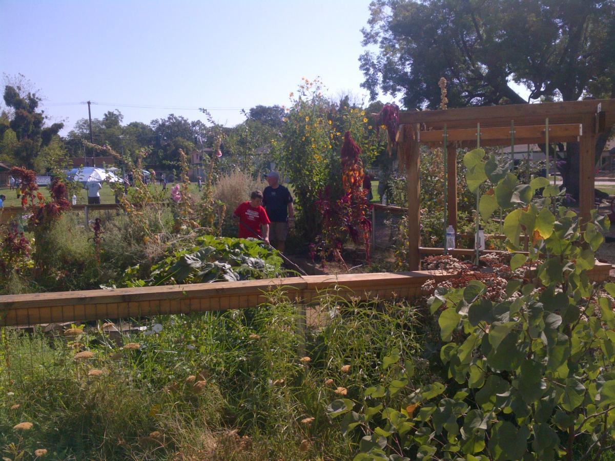 Theodore Judah Elementary School Garden · Bret Harte Elementary School  Garden