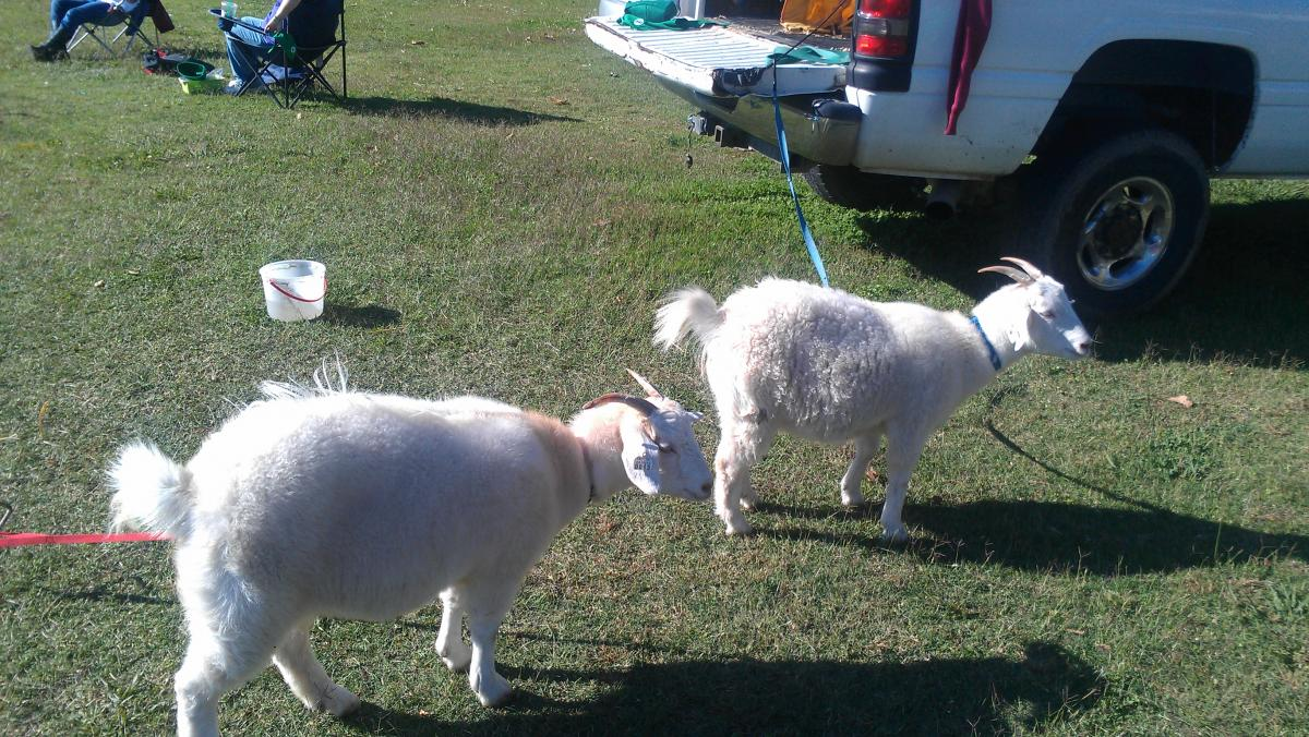 Image of Farm Day at Bowling Green McCoy Academy